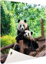 Spelende pandas Tuinposter 50x50 cm - Foto op Tuinposter / Schilderijen voor buiten (tuin decoratie)
