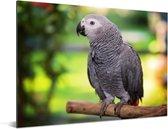 Grijze roodstaart op een tak Aluminium 160x120 cm - Foto print op Aluminium (metaal wanddecoratie) XXL / Groot formaat!
