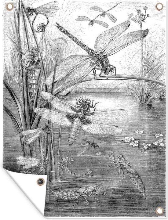 Een zwart-wit illustratie van enkele libellen tuinposter 30x40 cm - klein - Tuindoek / Buitencanvas / Schilderijen voor buiten (tuin decoratie)