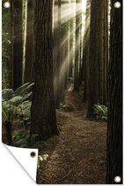 Zonnestralen tussen de Redwood bomen tuinposter 80x120 cm - Tuindoek / Buitencanvas / Schilderijen voor buiten (tuin decoratie)