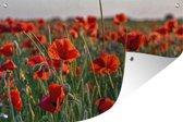 Tuinposter - Muurdecoratie - Bloemen - Klaprozen - Veld - 180x120 cm