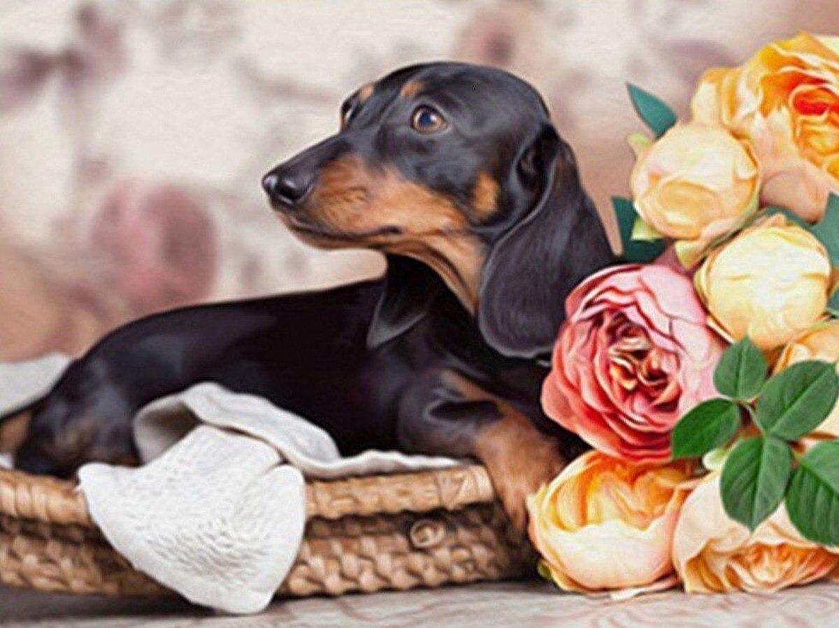 Premium Paintings - Teckel Hond - Diamond Painting Volwassenen - Pakket Volledig / Pakket Full - 30x40 - Moederdag cadeautje