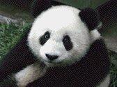MyHobby Borduurpakket – Panda 40×30 cm - Aida stof 5,5 kruisjes/cm (14 count)