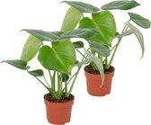 Monstera 'Deliciosa' - Gatenplant - Set Van 2 - ↑ 30-40cm - Ø 12cm