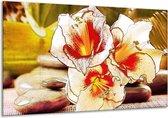 Glasschilderij Bloem | Wit, Rood, Geel | 120x70cm 1Luik | Foto print op Glas |  F004771