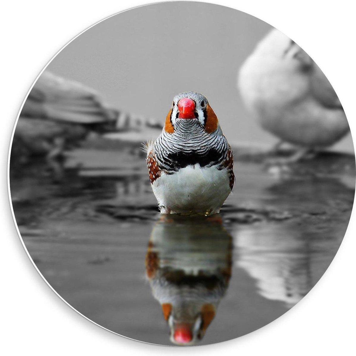 Forex Wandcirkel - Gekleurde Vogel op zwart/wit achtergrond - 50x50cm Foto op Wandcirkel (met ophangsysteem)