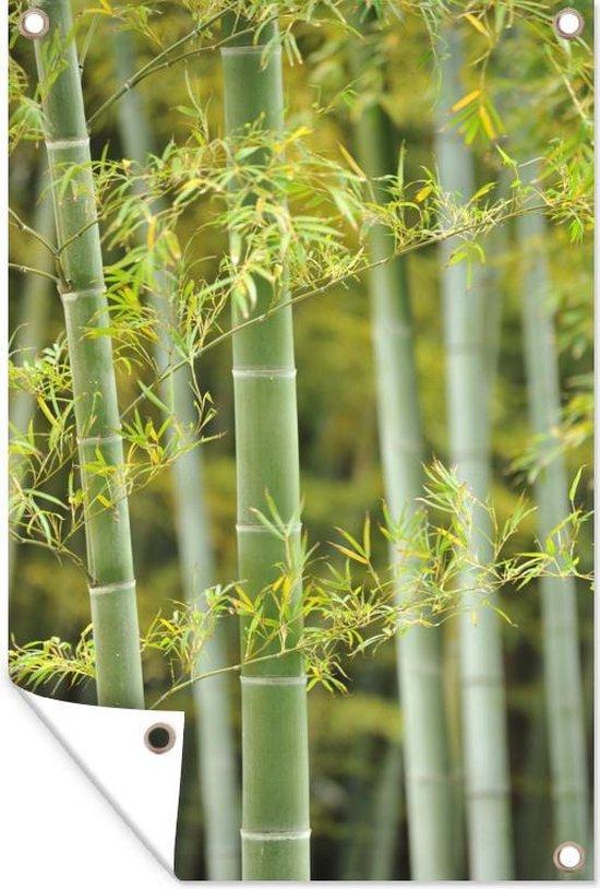 Bol Com Tuinposter Bamboe Bamboe In Bloei 120x180 Cm Tuindoek Buitencanvas Schilderijen