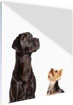 Omhoog kijkende honden Glas 80x120 cm - Foto print op Glas (Plexiglas wanddecoratie)