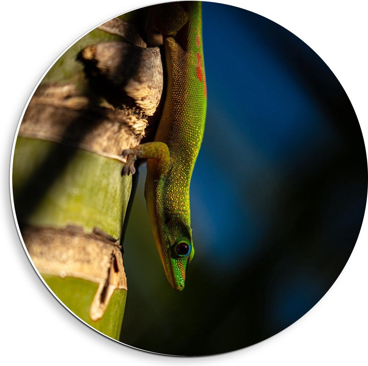 Forex Wandcirkel - Groene/Gele Hagedis op Boom - 40x40cm Foto op Wandcirkel (met ophangsysteem)