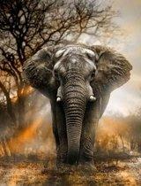 Diamond Painting - Hobby pakket - Diamond painting volwassenen - Grote afrikaanse olifant 40x30cm - Ronde steentjes - Volledig pakket