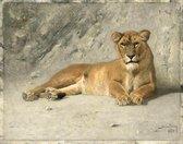 Schilderij - Jan van Essen, Rustende Leeuwin, 80x60cm.  1885