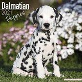 Dalmatier Kalender Puppies 2021