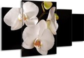 Canvas schilderij Orchidee | Wit, Zwart | 160x90cm 4Luik