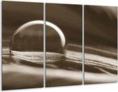 Schilderij | Canvas Schilderij Macro | Sepia | 120x80cm 3Luik | Foto print op Canvas