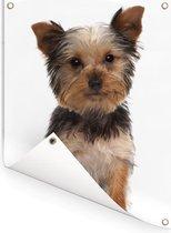 Poserende Yorkshire Terrier Tuinposter 60x80 cm - Tuindoek / Buitencanvas / Schilderijen voor buiten (tuin decoratie)