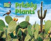 Prickly Plants