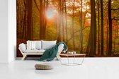 Fotobehang vinyl - De herfstzon komt op bij een kleurrijk bos in het Deense Jutland breedte 395 cm x hoogte 220 cm - Foto print op behang (in 7 formaten beschikbaar)