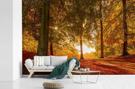 Fotobehang vinyl - De herfstzon schijnt door een bos dichtbij het Deense Aarhus breedte 600 cm x hoogte 400 cm - Foto print op behang (in 7 formaten beschikbaar)
