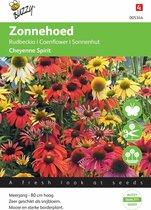 Buzzy® Echinacea purpure Cheyenne Spirit (1m²)