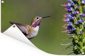 Een calliope kolibrie tijdens de vlucht Tuinposter 180x120 cm - Tuindoek / Buitencanvas / Schilderijen voor buiten (tuin decoratie) XXL / Groot formaat!