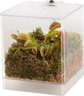 Swampworld Mini Terrarium - Vleesetende plant - Venus vliegenval - met LED lamp + Handige Watermeter, Aarde, Mos en Regenwater