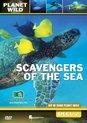 Scavengers Of The Sea