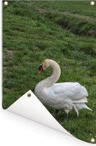 Een witte trompetzwaan in het gras Tuinposter 120x180 cm - Tuindoek / Buitencanvas / Schilderijen voor buiten (tuin decoratie) XXL / Groot formaat!