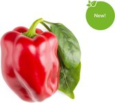 Click and Grow - Navulling Rode Paprika - 3 Pack