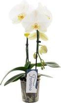 Fontano N°9 Orchidee Cadeau
