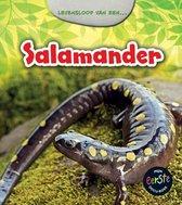Mijn eerste docuboek  -   Salamander