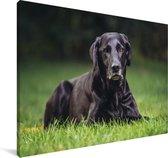 Een zwarte labrador in het gras Canvas 180x120 cm - Foto print op Canvas schilderij (Wanddecoratie woonkamer / slaapkamer) / Huisdieren Canvas Schilderijen XXL / Groot formaat!