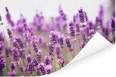 Zonovergoten lavendelveld Poster 90x60 cm - Foto print op Poster (wanddecoratie woonkamer / slaapkamer)