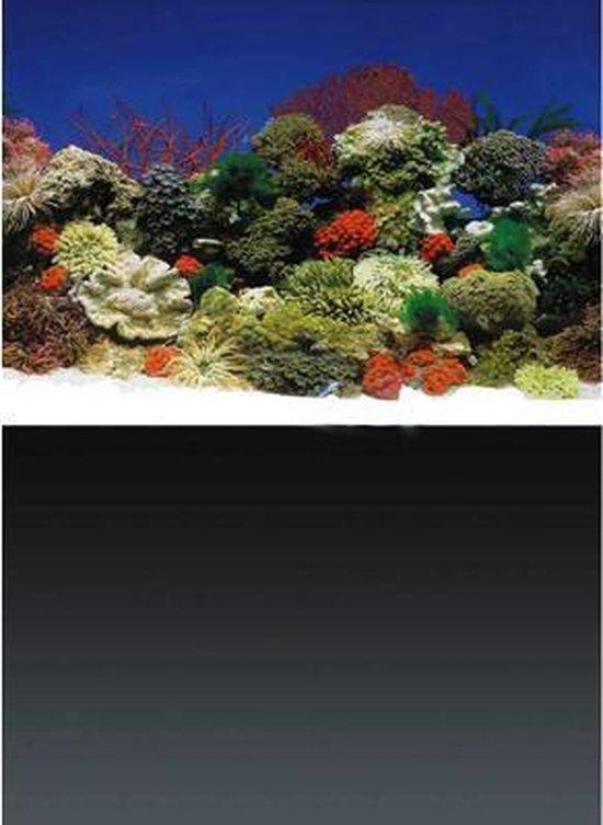 Superfish Poster 1 - 120 x 61cm - Aquarium Decoratie achterwand