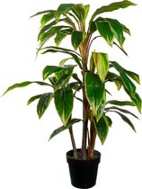 HTT Decorations - Kunstplant Cordyline breedbladig H100cm