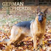 German Shepherds - Deutsche Schäferhunde 2021 - 18-Monatskalender mit freier DogDays-App