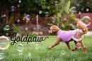 GoldPaw Series Hondentruien