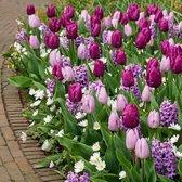 100x Bloembollenmix 'Purple Blend' -  Tulpen + Hyacinten + Anemonen - Paars en wit - Winterhard - 100 bloembollen