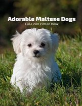 Adorable Maltese Dogs Full-Color Picture Book