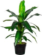 HTT Decorations – Kunstplant Dracaena Fragans H60 cm