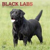 Labrador Retrievers Black Kalender 2021