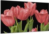 Glasschilderij Tulpen | Rood, Groen, Zwart | 120x70cm 1Luik | Foto print op Glas |  F003189