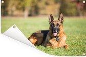 Duitse herdershond ligt op het gras Tuinposter 90x60 cm - Tuindoek / Buitencanvas / Schilderijen voor buiten (tuin decoratie)