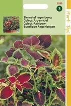 Hortitops Zaden - Coleus Blumei Regenboogmengsel