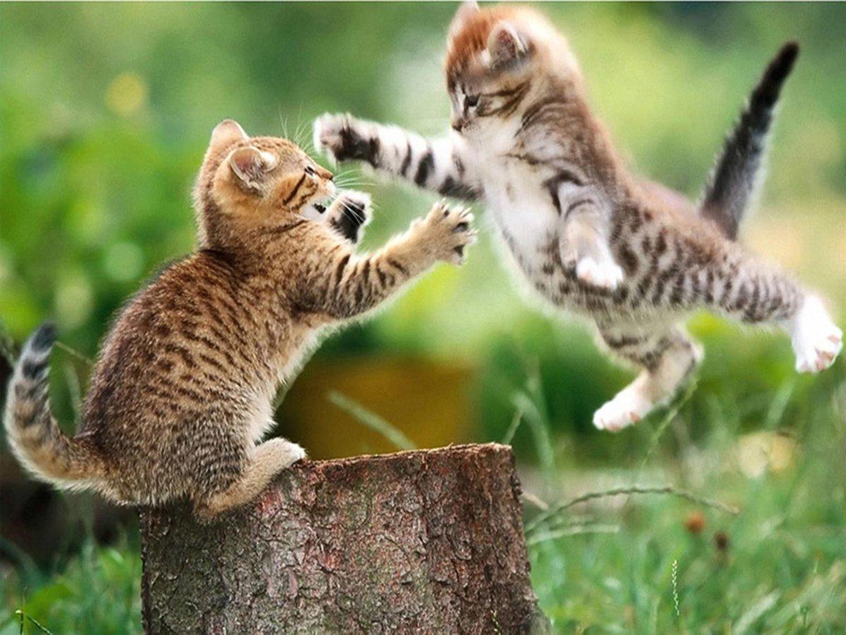 Diamond Painting Pakket Spelende kittens - Volledig - FULL - Diamond Paintings - 40x30 cm - SEOS Shop ®