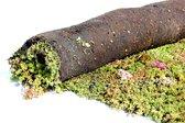 Groen dak sedummixmat beplanting 1,2m2 inclusief zakje voeding