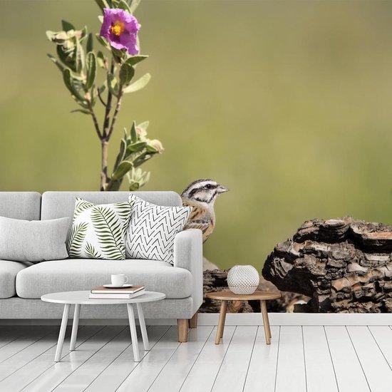 Fotobehang vinyl - Grijze gors bij paarse bloem breedte 340 cm x hoogte 270 cm - Foto print op behang (in 7 formaten beschikbaar)