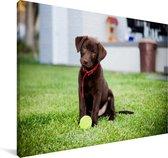 Labrador Retriever puppy met een tennisbal Canvas 180x120 cm - Foto print op Canvas schilderij (Wanddecoratie woonkamer / slaapkamer) / Huisdieren Canvas Schilderijen XXL / Groot formaat!