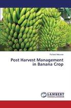 Post Harvest Management in Banana Crop