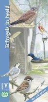In beeld 24 - Erfvogels in beeld