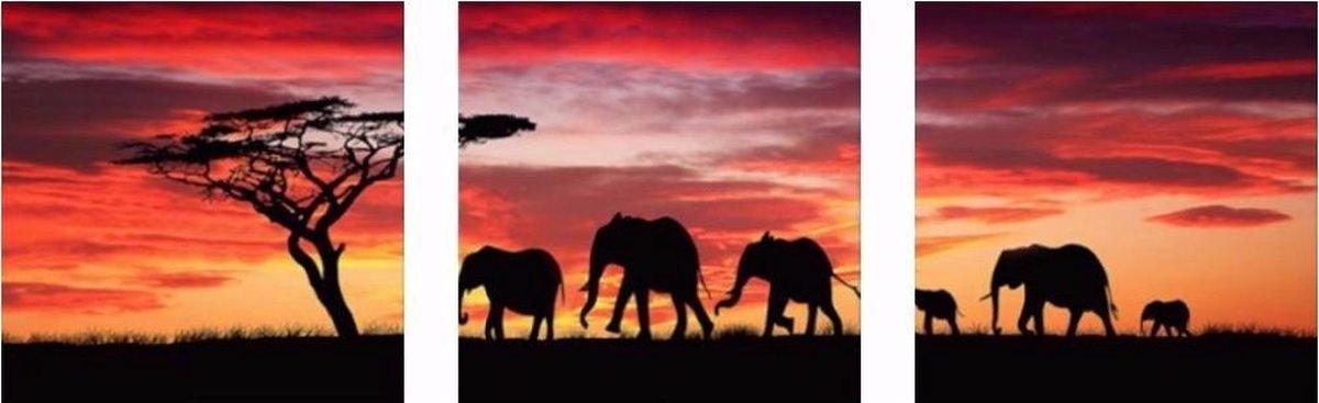Schilderen op nummer pakket olifant schaduw drieluik - drie keer 40 x 50 cm - met frame